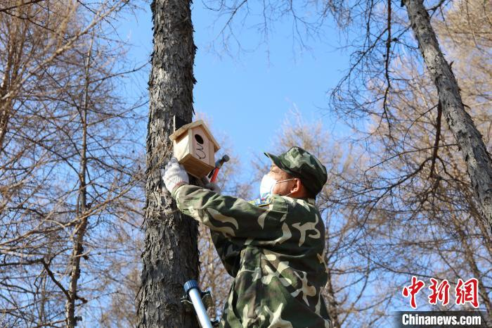 """内蒙古大兴安岭的""""森林医生""""兼职的小鸟保育员"""